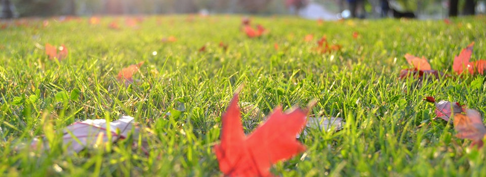 Is your property ready for Fall?